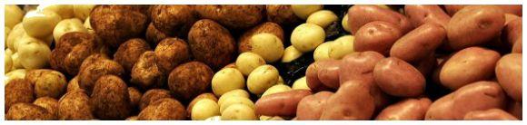 разнообразие сортов картофеля