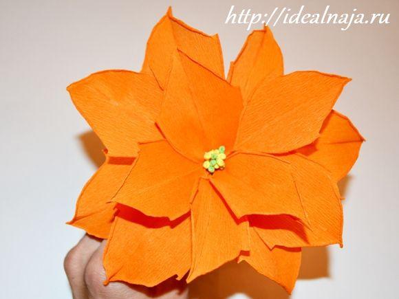 Цветок пуансетии из гофрированной бумаги
