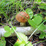Как вырастить лесной гриб